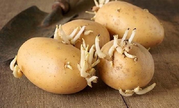 Những loại rau củ không được ăn sống